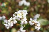 山中美丽花朵.JPG
